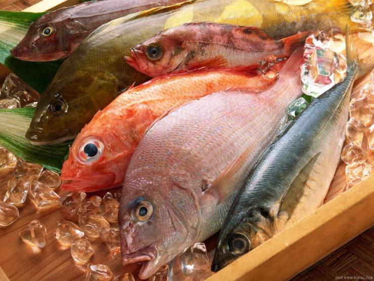 Các loại cá giàu Omega 3